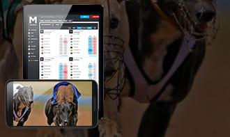 Parimutuel betting dog best horse racing betting books